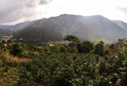 Avicanna Inc. Acquires 60% Stake in Colombian Medical Marijuana Firm Santa Marta Golden Hemp